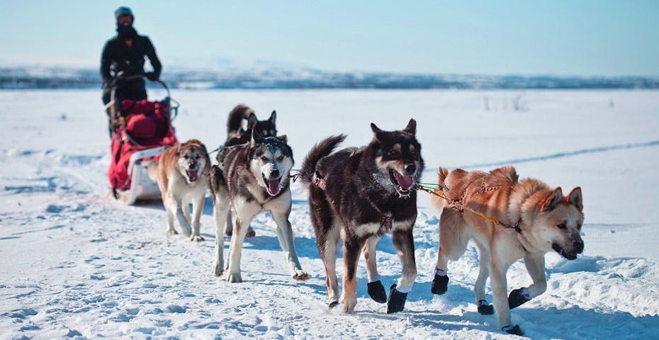 dogs-891952_960_720.jpg